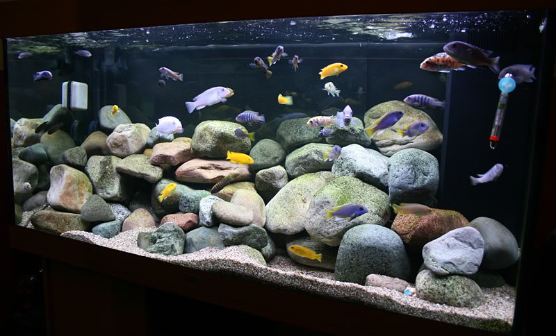 Aquascaping African Cichlids 125G Tank | 200111